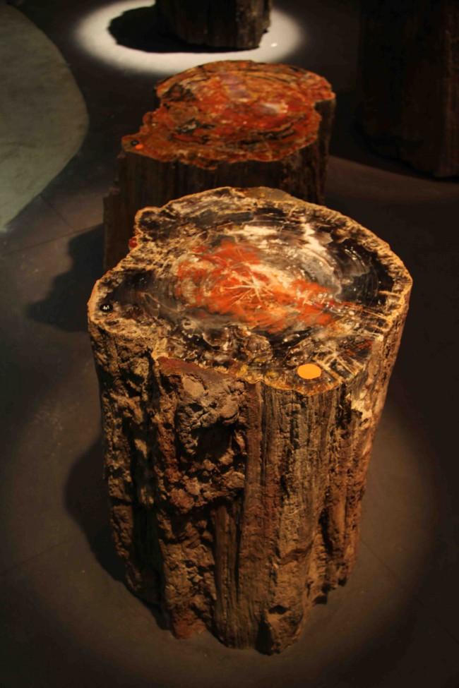 Tronc en bois pétrifé / crystal wood