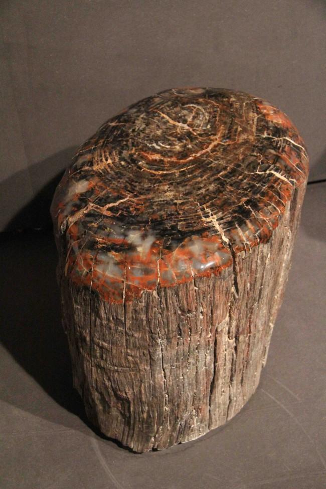 Tronc d arbre pètrifiè / petrified wood